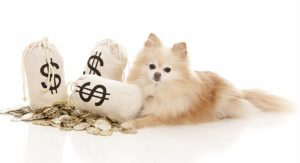 how much does a puppy cost?