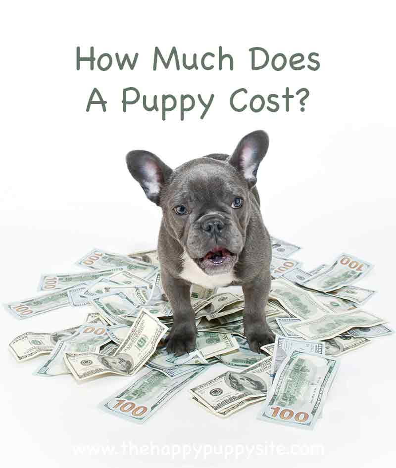 How Much Does A Puppy Cost - And What Makes Some So Expensive?