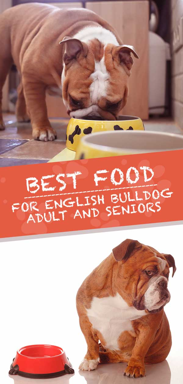 Best Food For English Bulldog Adults and Senior Dogs
