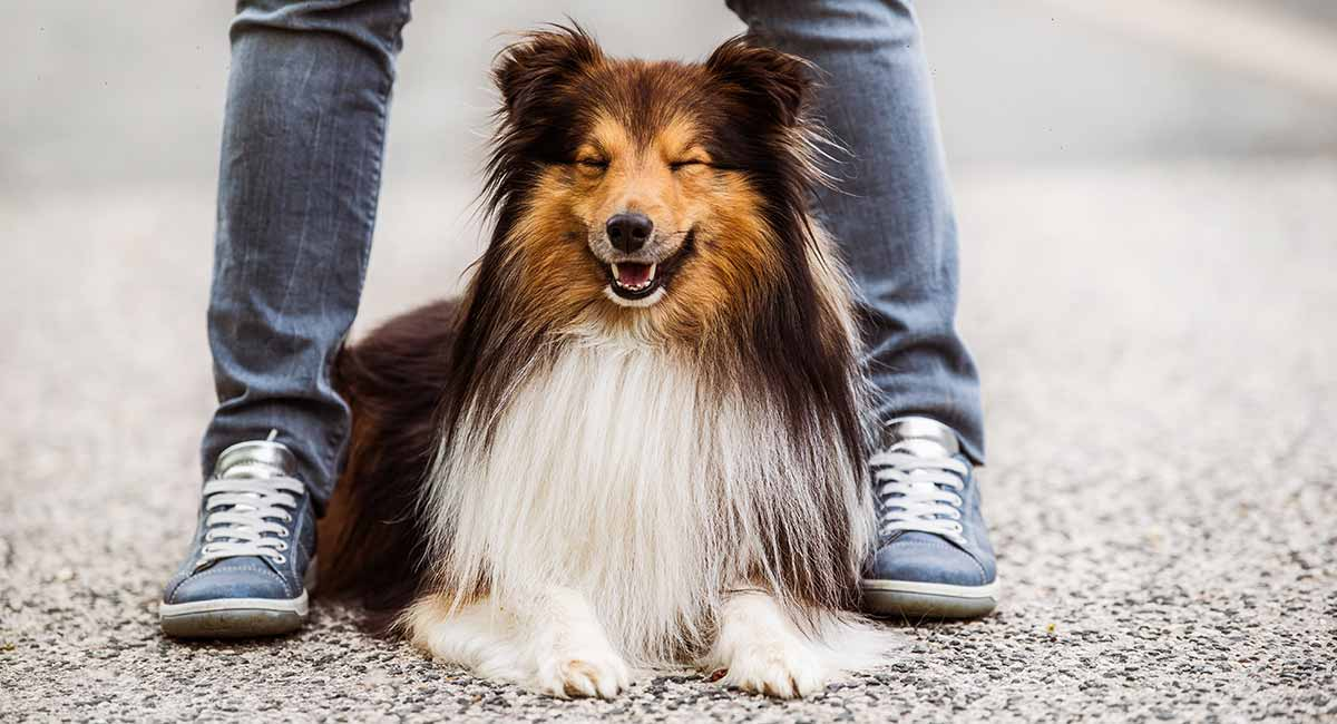 Long Haired Dogs Gorgeous Hairy Breeds And How To Care For