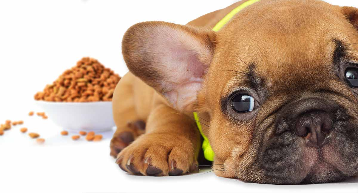 best food for french bulldog puppy