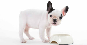 Best Food for French Bulldog Puppy Dogs
