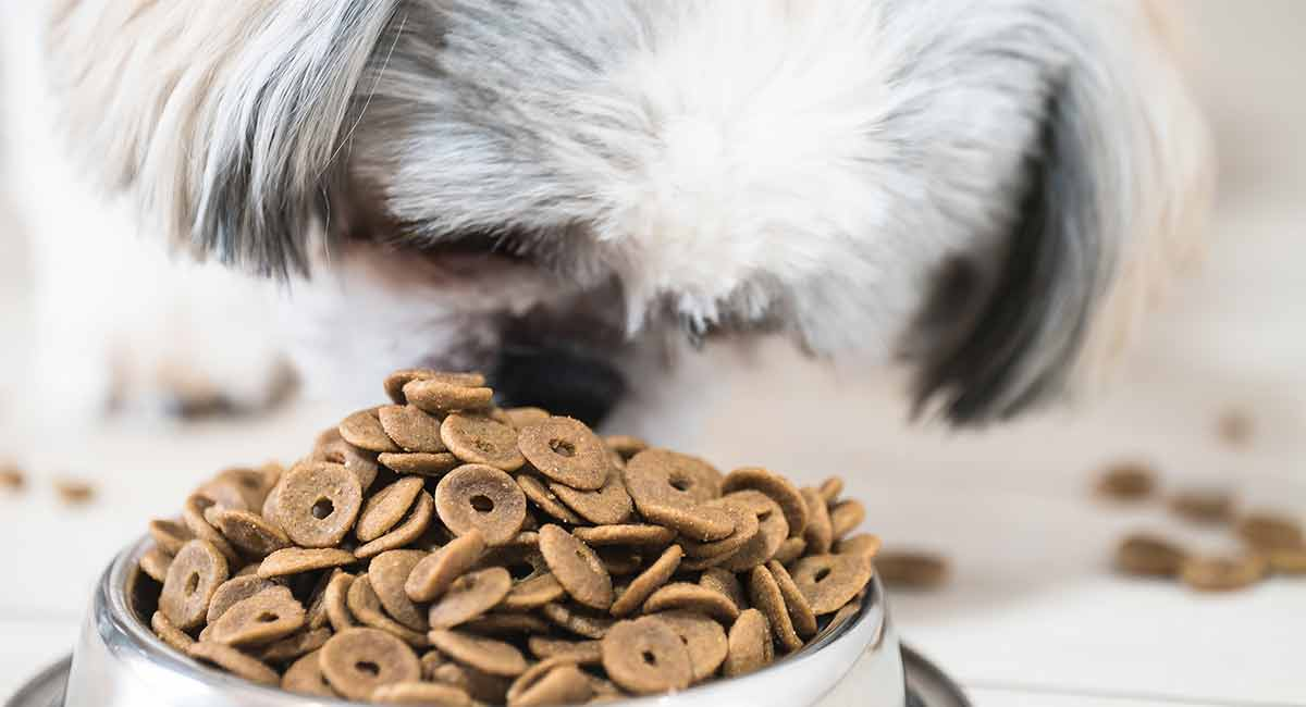 best puppy food for shih tzu