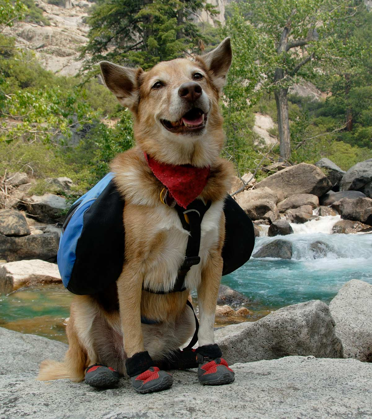 Best Dog Hiking Boots For Off Road Walking With Your Pup