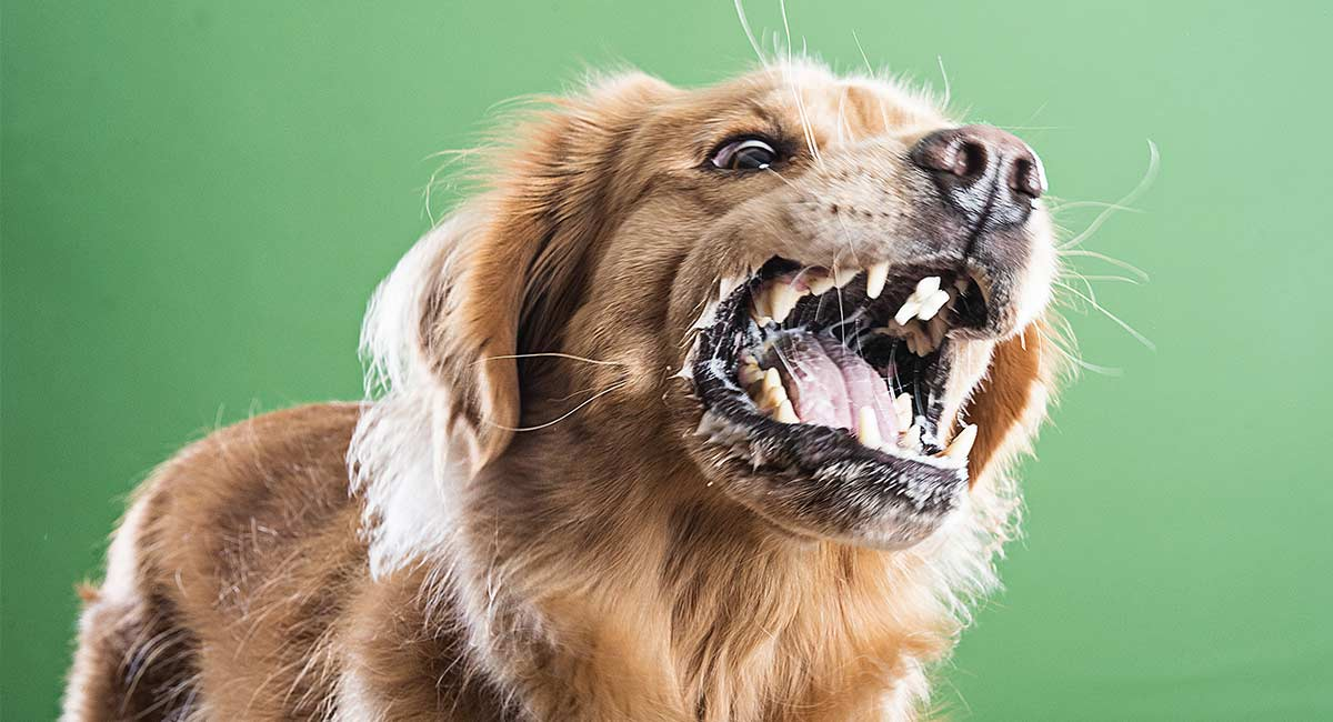 food aggression in dogs