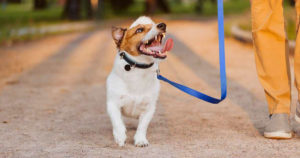 Loose Leash Walking: An Expert Guide to Getting a Relaxing Stroll