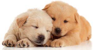 Top 10 Puppy Essentials