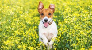 Terrier Dog Breeds – Which Terrier Will Win Your Heart?