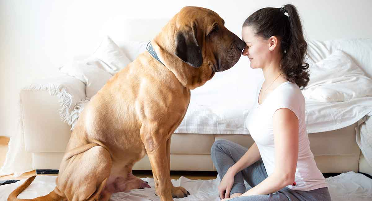 Big Dog Names 450 Huge Ideas For Male And Female Big Dog