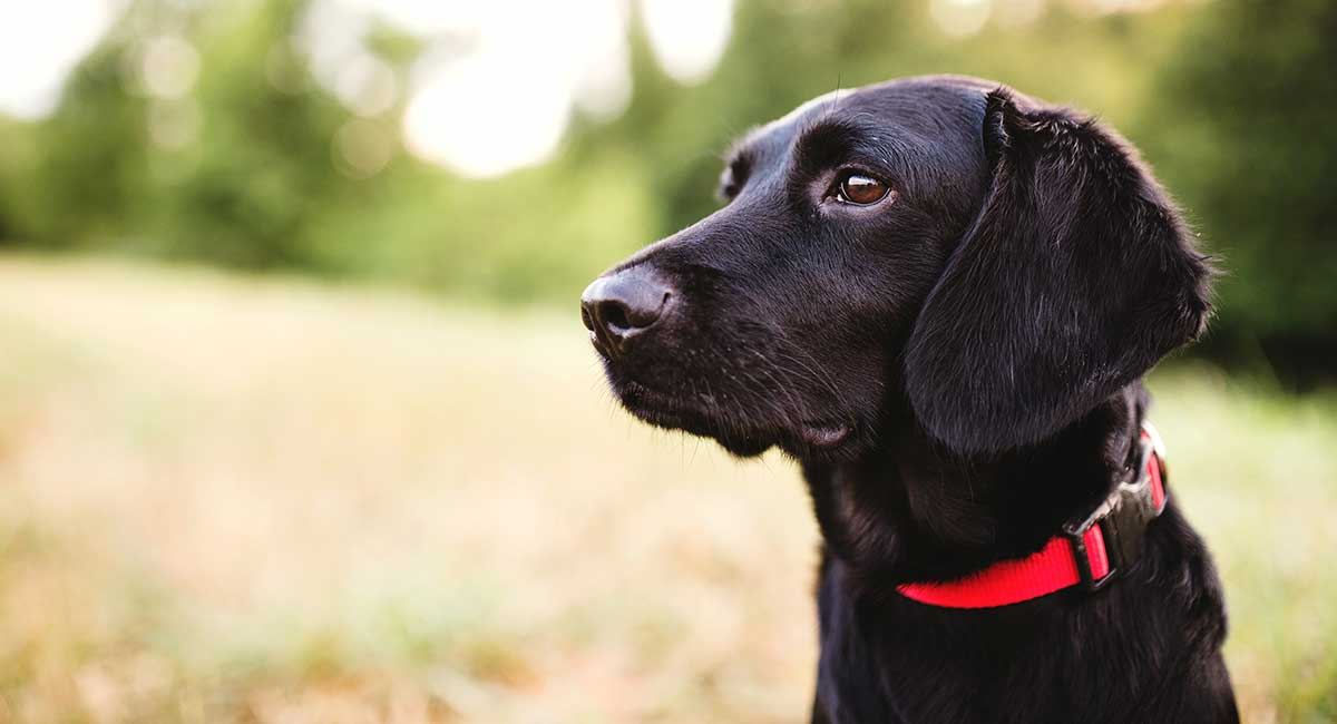 Black Dog Names – Fabulous Names For Gorgeous Pups