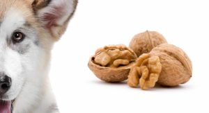 Can Dogs Eat Walnuts Safely Or Are They Best Avoided?