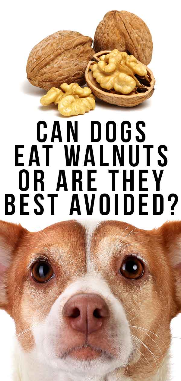 can dogs eat walnuts or are they best avoided