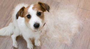 Dog Losing Hair – A Vet's Guide To Alopecia In Dogs