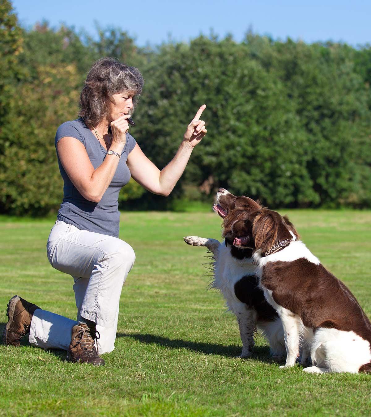 best dog whistles