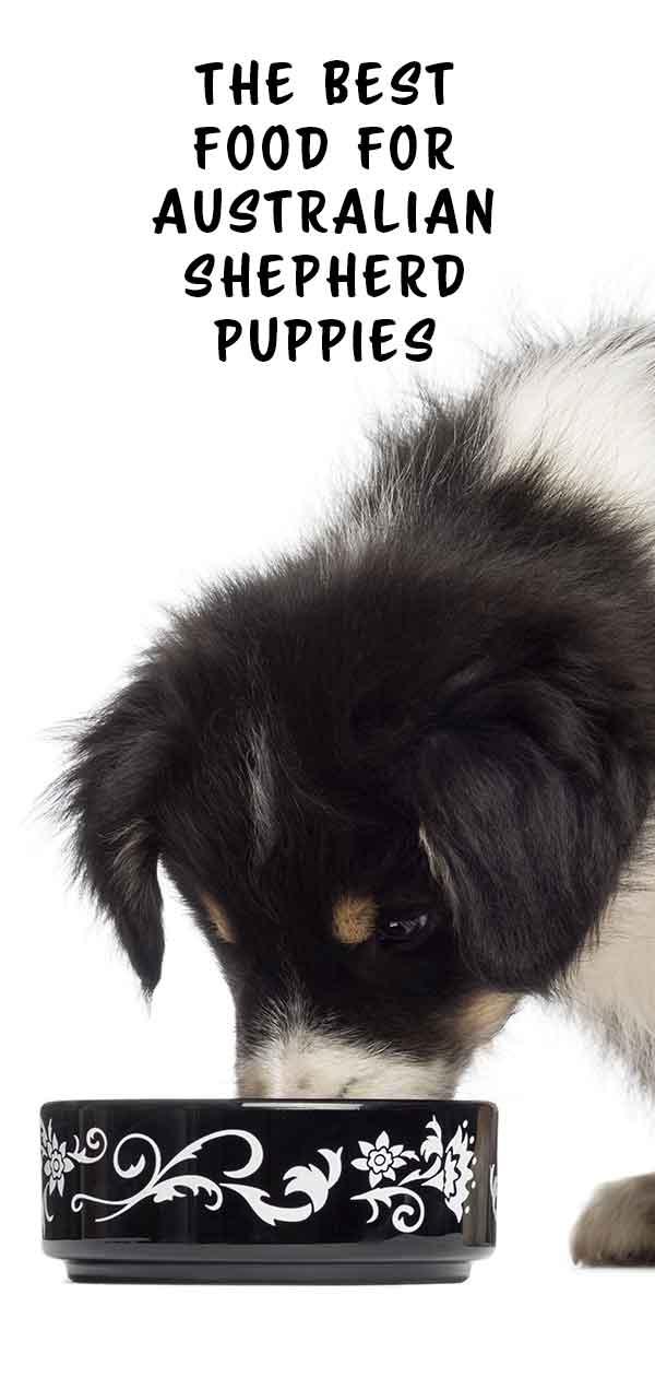best food for Australian shepherd puppy