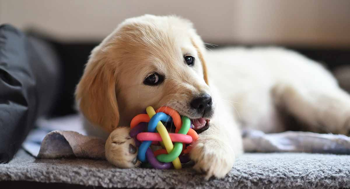 best toys for golden retrievers