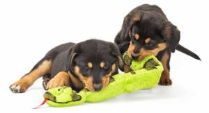 The Best Toys for Rottweilers That Love To Play and Chew