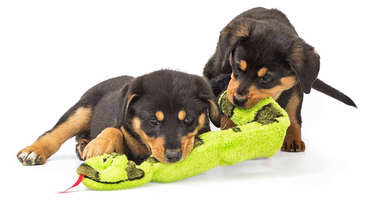 best toys for rottweilers