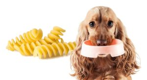 Can Dogs Eat Pasta for Their Dinner Too, or Is It Bad for Them?