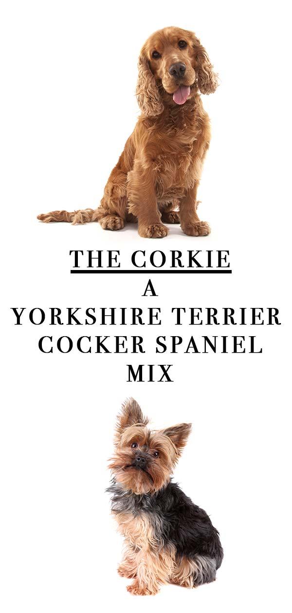 corkie