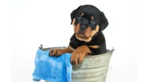 dog bathtub