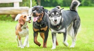 Dog Breeds: Detailed Reviews Of Purebred and Mixed Breed Dogs