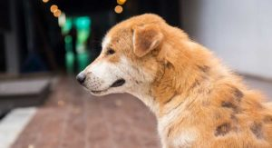 Why Is My Dog Losing Hair and What Should I Do? A Vet's Guide