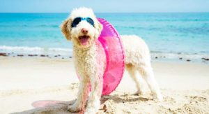 Best Dog Sunscreen – Which Ones Offer The Most Protection?