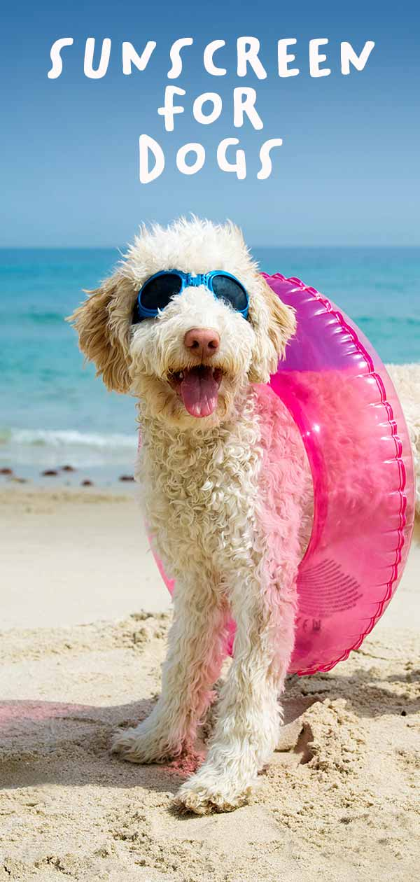 best dog sunscreen