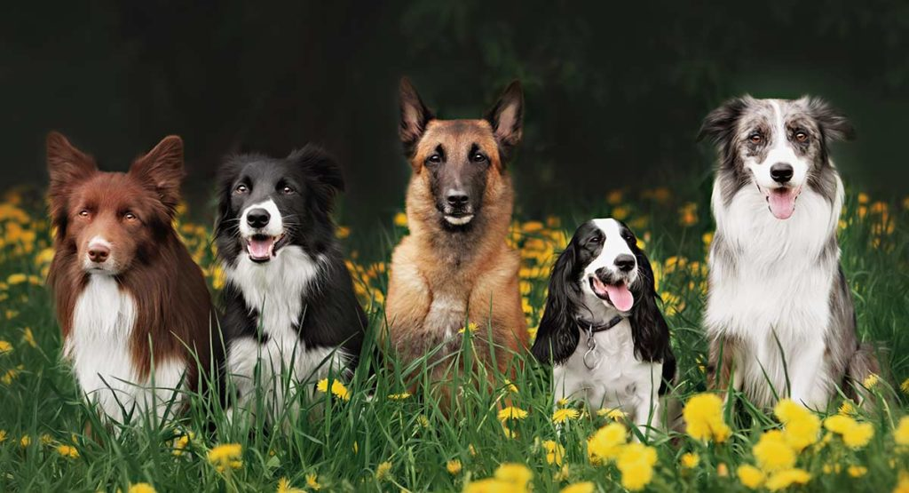 Learn more about doggy daycare.