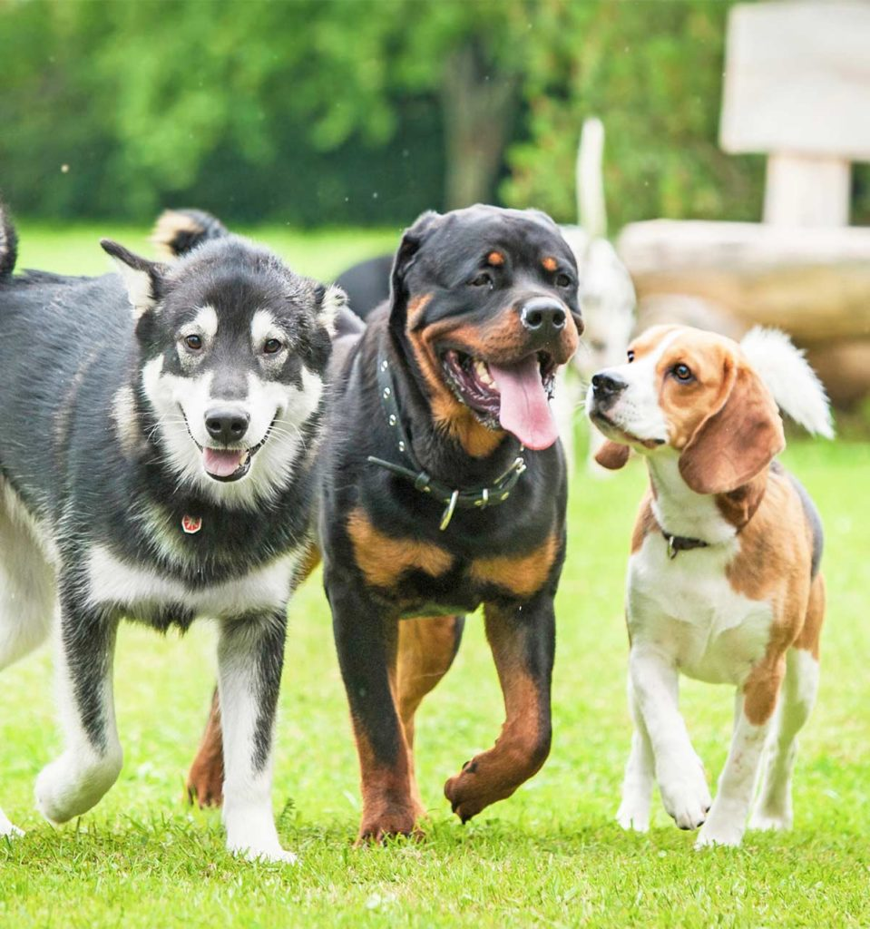 Should your dog go to doggy daycare?