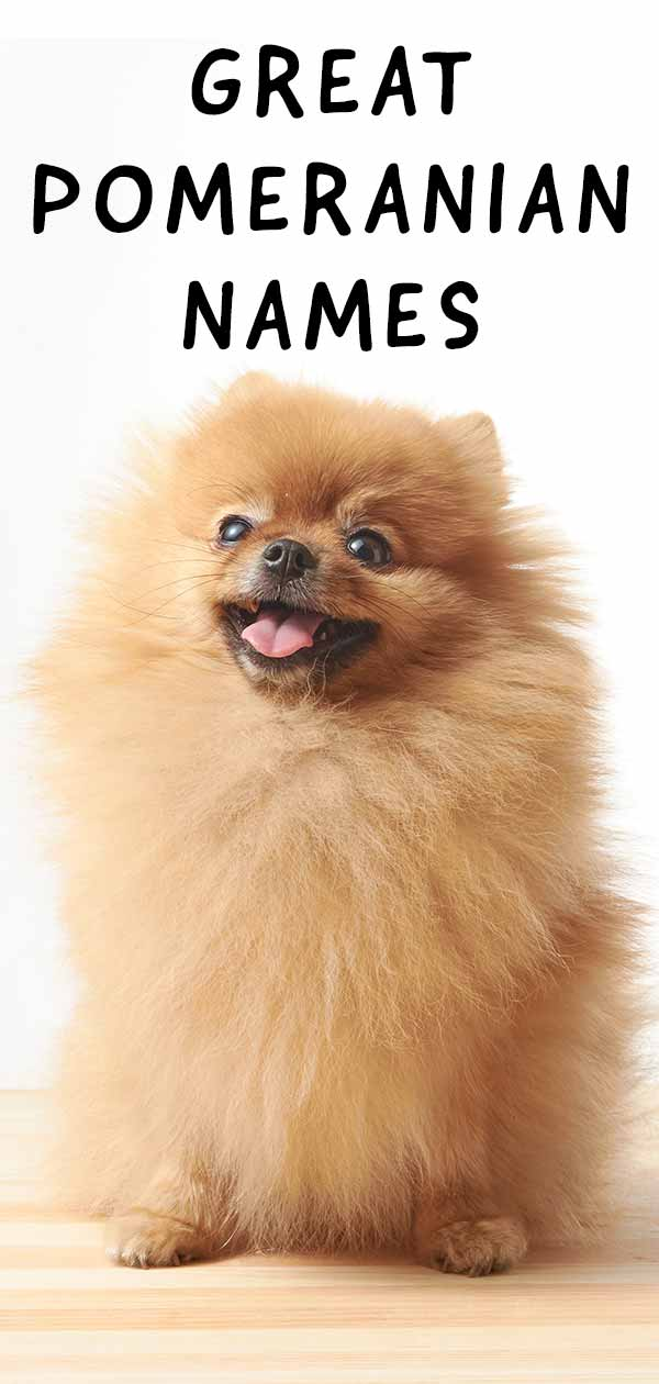 Cool Pomeranian names