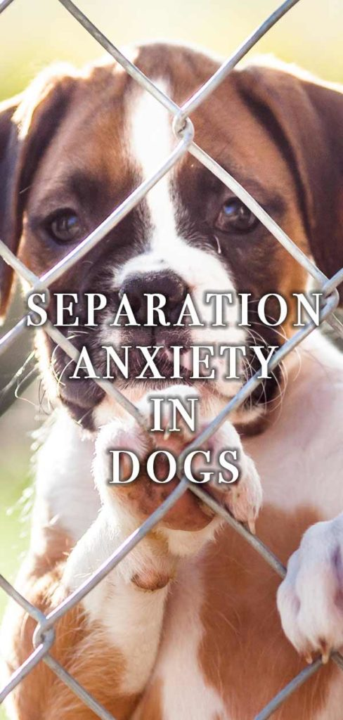 How can you help separation anxiety in dogs?