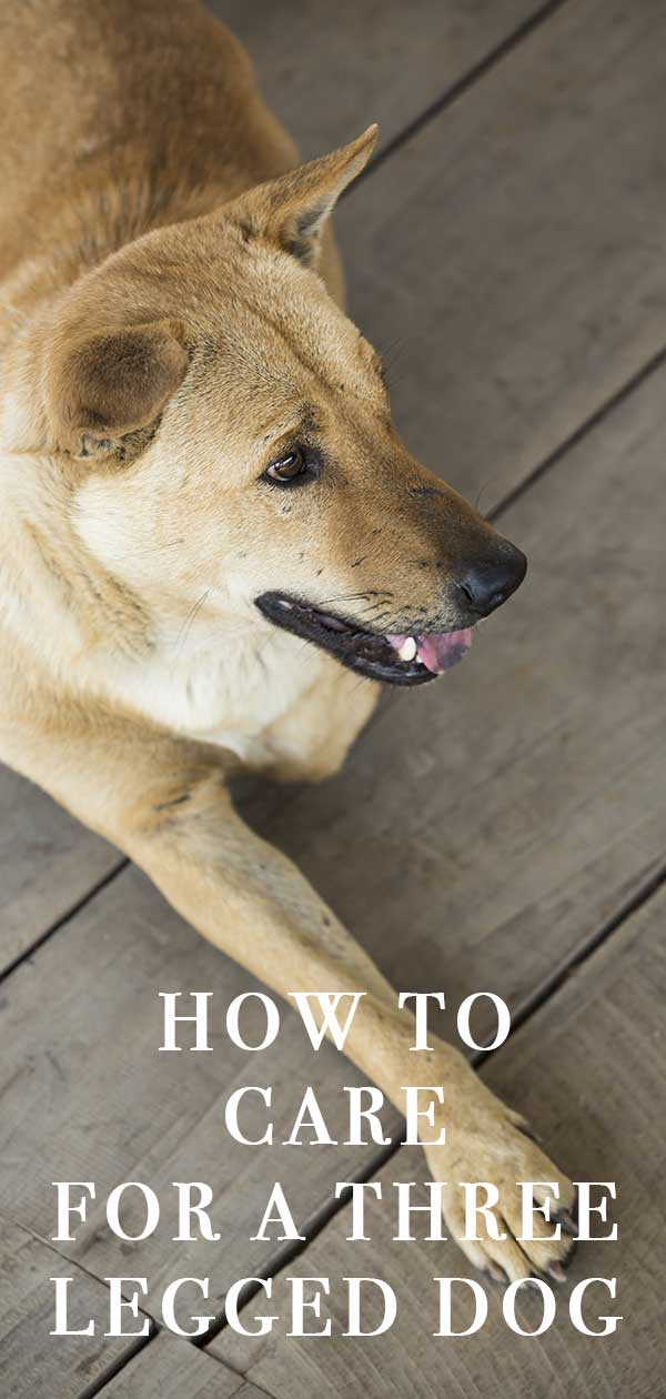 How should you care for a 3 legged dog?