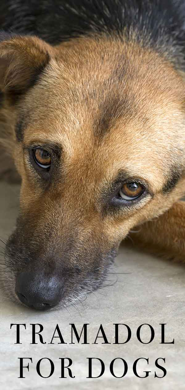 tramadol for dogs