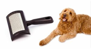 Best Brush For Goldendoodle Dogs And Their Curly Fur Coats