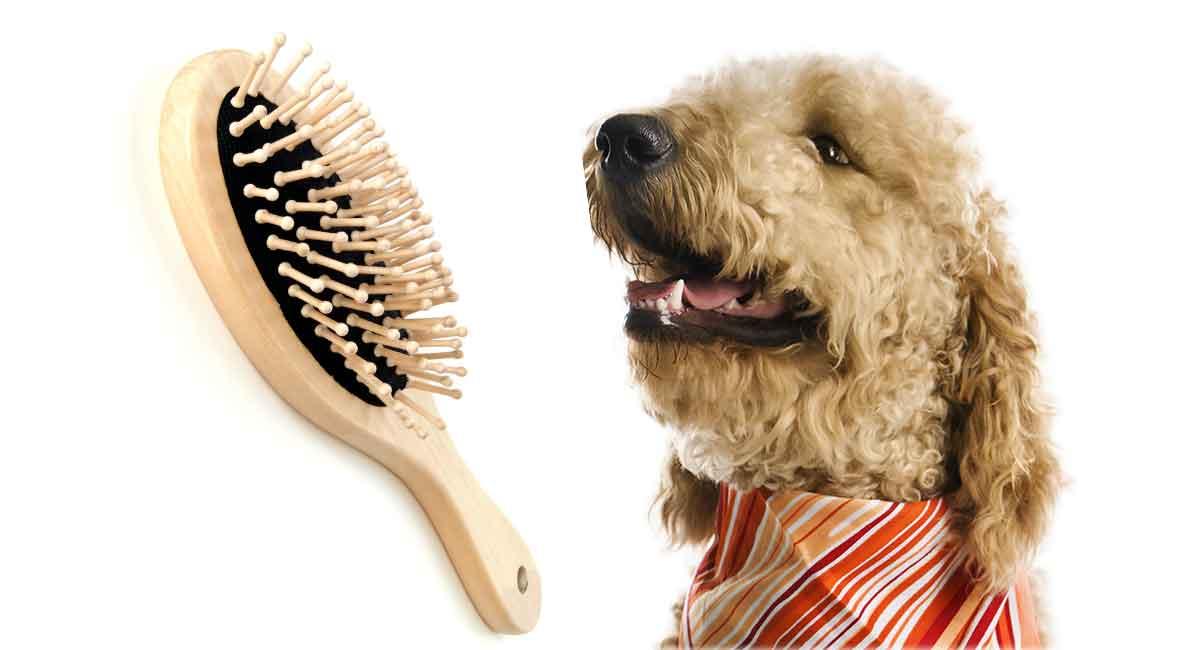 best brush for goldendoodle