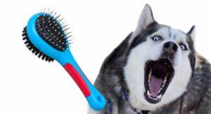 best brush for huskies