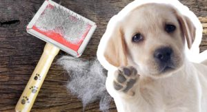 Best Brush For Labs That Shed Loads And Love The Mud