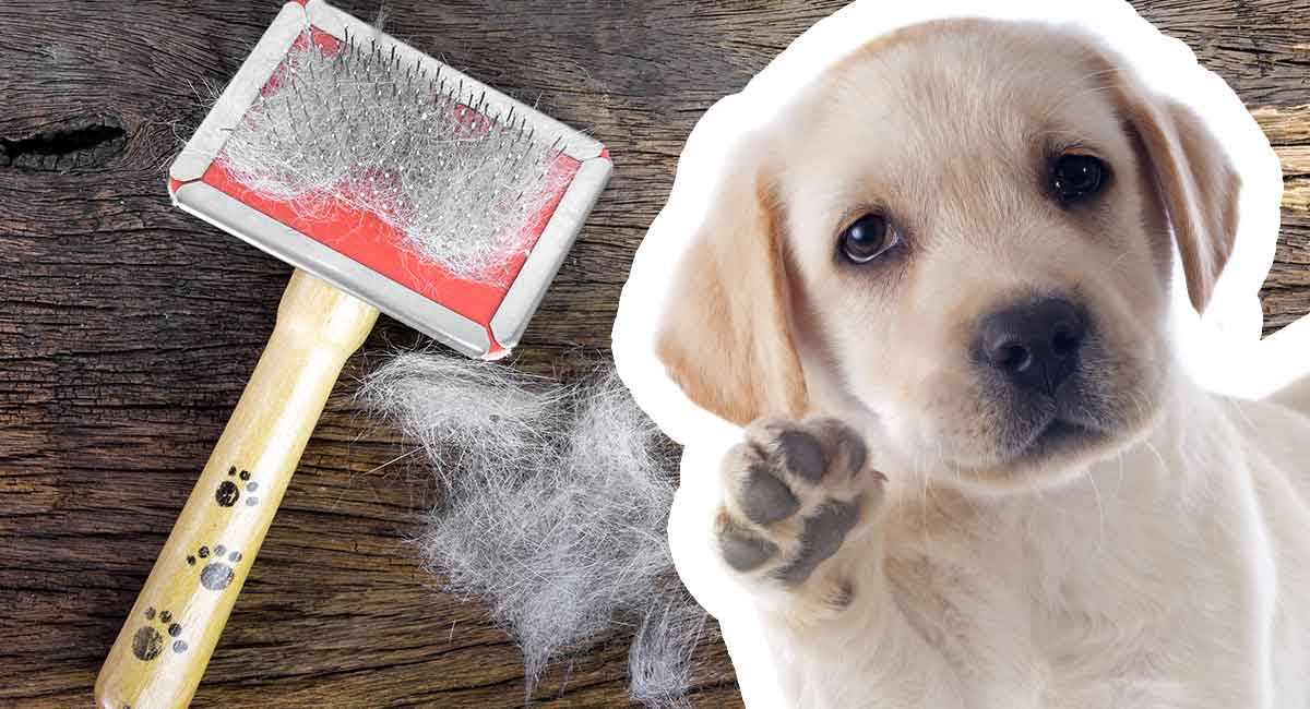 best brush for labs