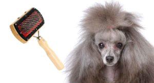 best brush for poodles