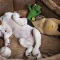 Best Dog Beds For Beagles To Snuggle Up In