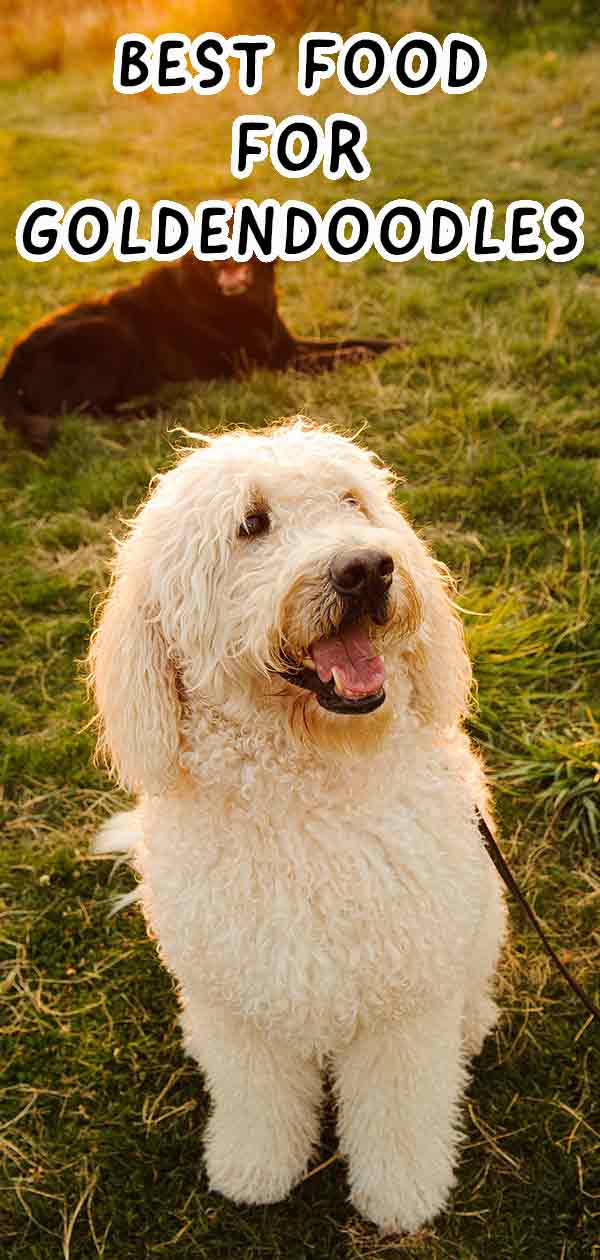 Best Dog Food For Goldendoodles To Keep Them Happy And Healthy