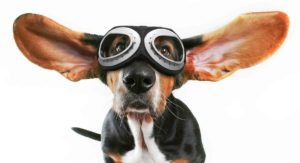 Best Dog Goggles – Eye Protection or Vision Enhancement