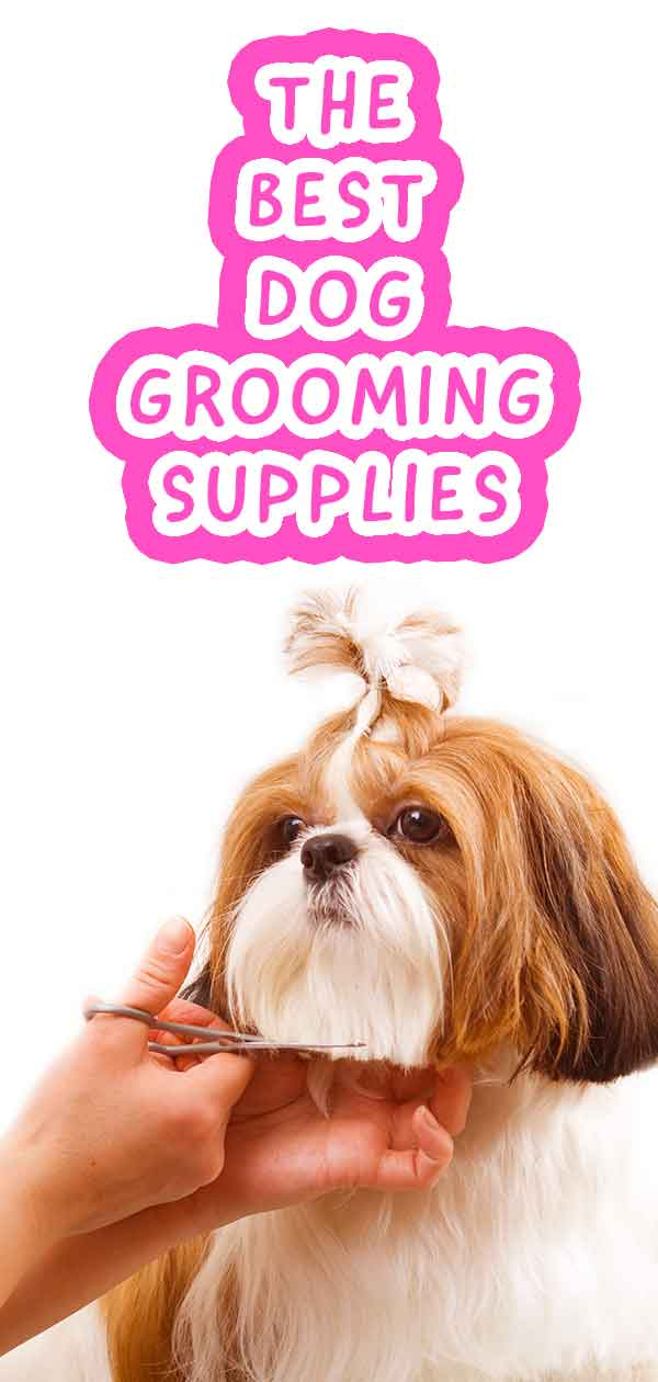 Check out our recommendations for professional dog grooming kits.