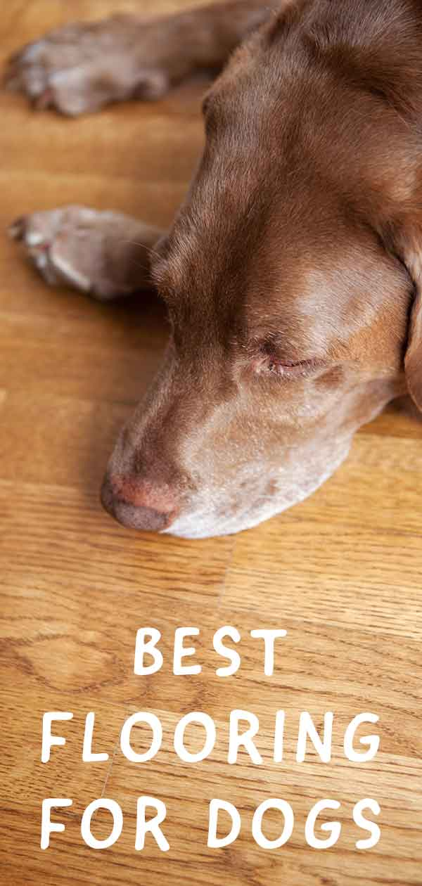 Best Flooring For Dogs Which Type Will You Choose