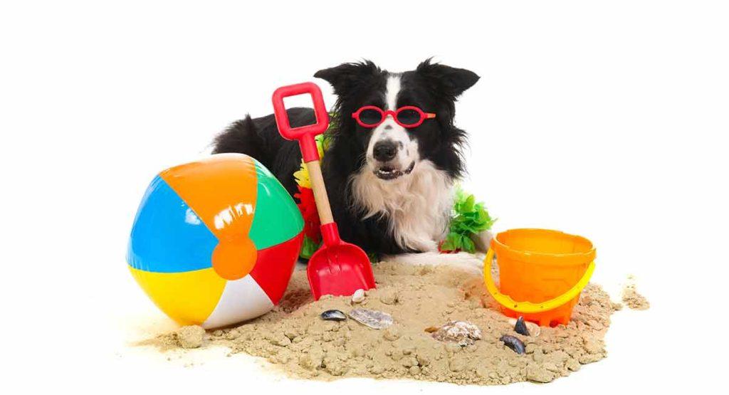 Puppy Dog Ceramic Coaster by Splosh Lucy the Border Collie