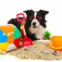 best toys for border collies long