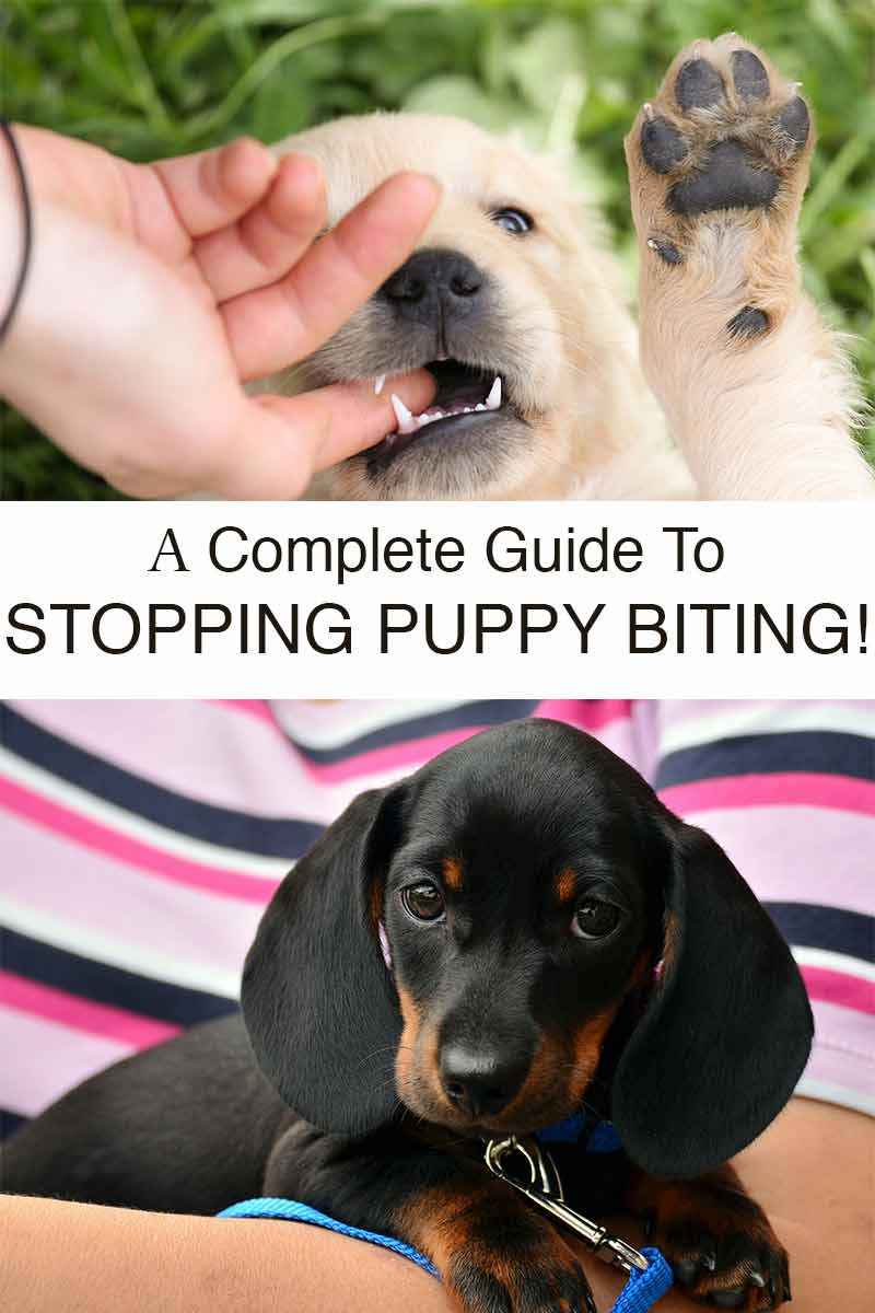 coping with puppy biting