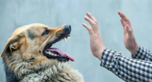 Dog Bite Treatment For Humans And Dogs